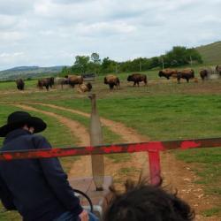 Et pour finir tous dans le chariot pour la chasse aux bisons !